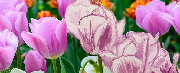 Your Tulips Live Sketches #SketchOff #MakeAStartInArt