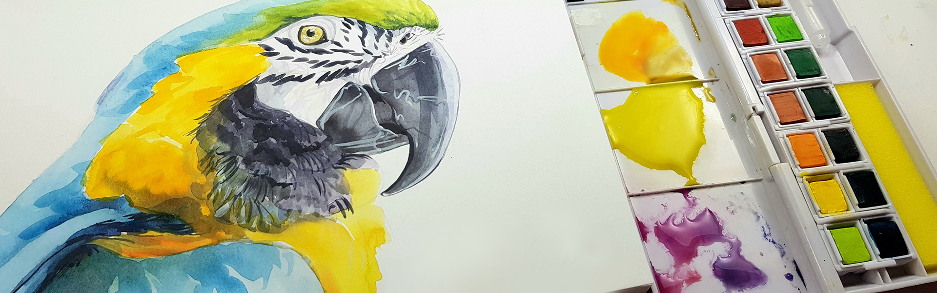 Derwent Inktense Paint Pan Set: Drawing a Macaw with Julia Woning